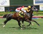 Katie's Kiss Wins the Summer Wind at Gulfstream, Aug. 15, 2015