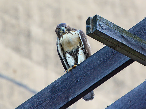Fledge on Transept Beam