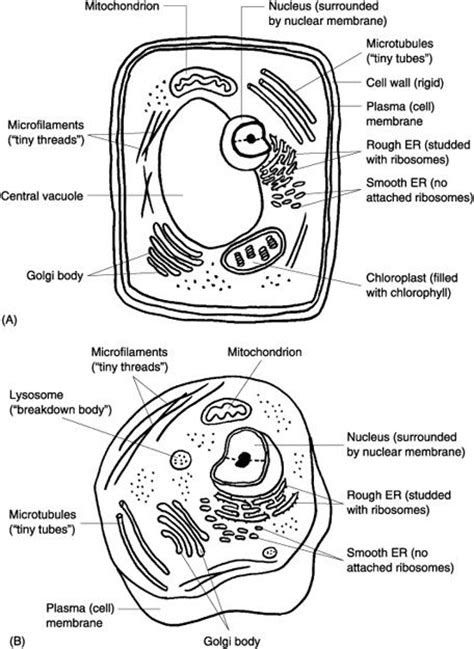 images  labeled plant cell parts worksheet