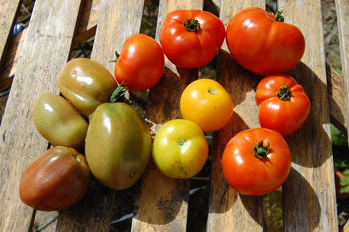 late toms