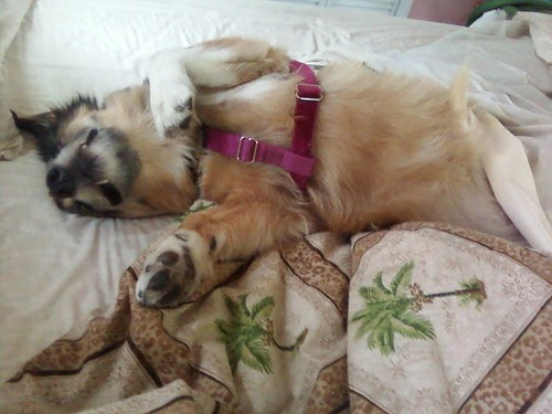 Maggie says vacation is exhausting!