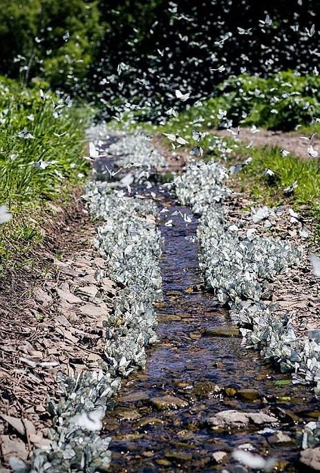 perierga.gr - Eκατομμύρια πεταλουδες έχουν εισβάλει στη Σιβηρία