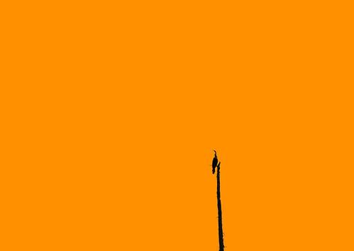 Pop art anhinga