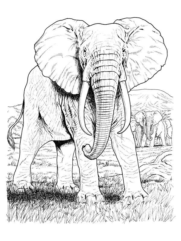 Coloriage A Imprimer Elephants Dans La Savane Gratuit Et Colorier