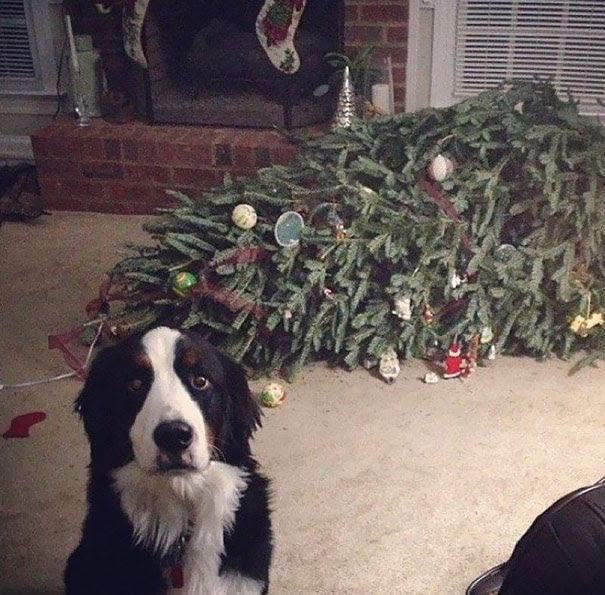 Oh Good, You're Here. The Tree Just Fainted!