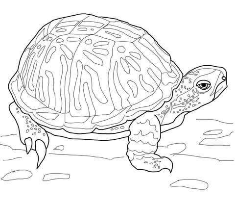 ornate box turtle coloring page  supercoloring