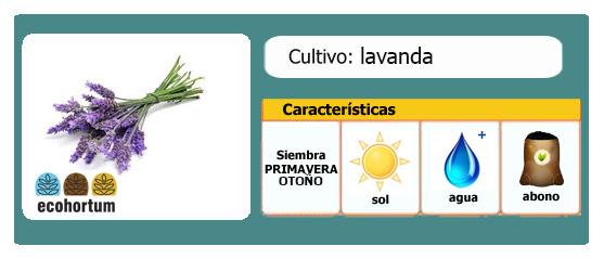 Ficha cultivo lavanda | EcoHortum