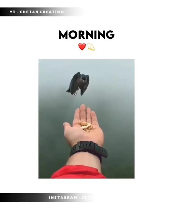 Letest Good Morning WhatsApp Status Video For WhatsApp - New Good Morning WhatsApp Status Video Download