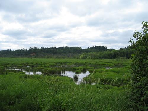 Wetlands, Cedar Canyon Rd, Banks, Oregon