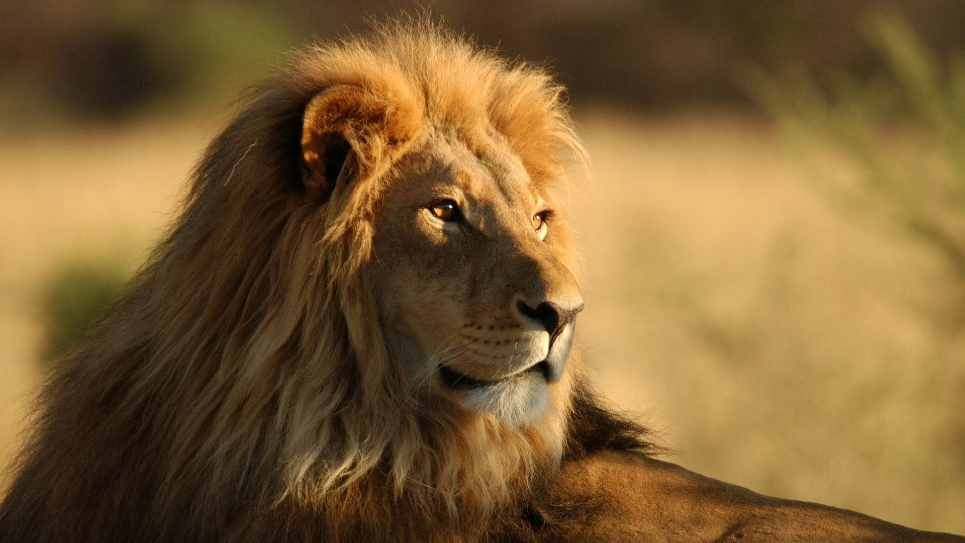 Free Lion Face Images Download Free Clip Art Free Clip Art On