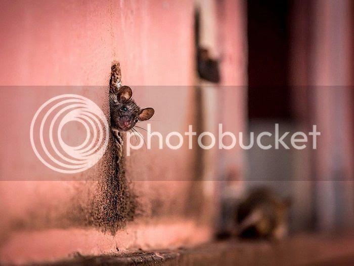http://i1379.photobucket.com/albums/ah128/zvd4/1cee0a5e-81ae-4680-8ad9-81d9cc076343_zps4zw5p9da.jpg