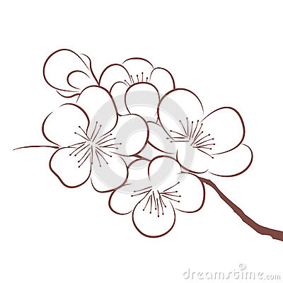 Cherry Blossom Branch Drawing At Getdrawingscom Free For Personal