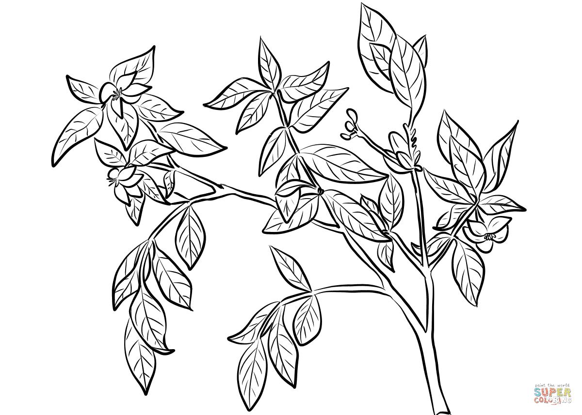 jasmijn kleurplaat