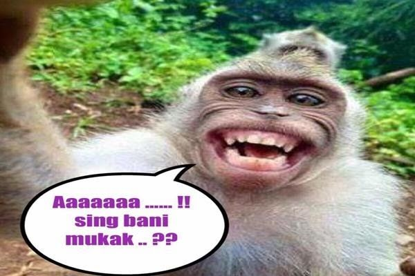 Gambar Meme Lucu Monyet | Meme bukan Meme(..)