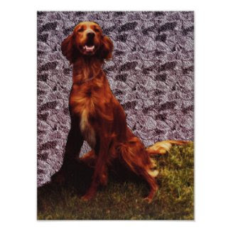 Irish Setter and Patterned Concrete Wall Poster