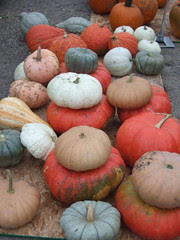 Pumpkins at Farmer's Market