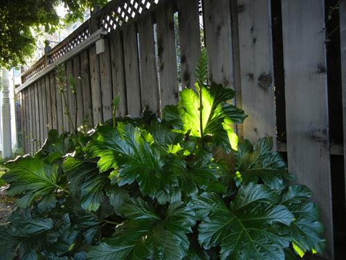 Back Lit Leaves _ 8590