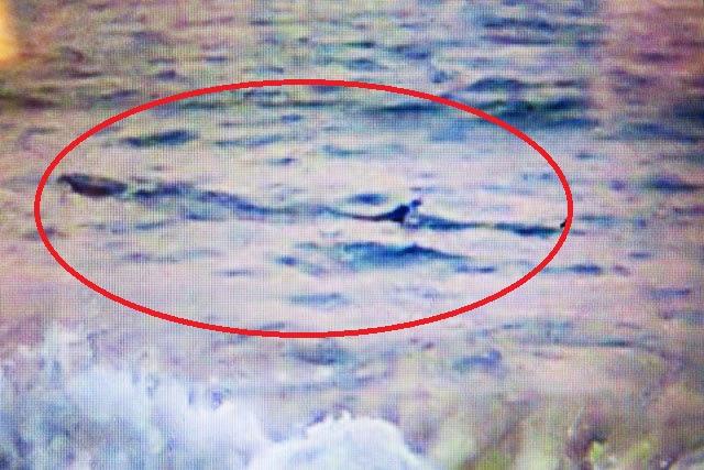 Hình ảnh Tin tức mới nhất ngày 19/11: Thông tin mới vụ cá khủng 1 tấn ở biển Phú Yên số 1