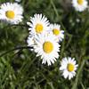 daisy test K02 f/8