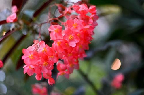 Phipps Conservatory - Flower