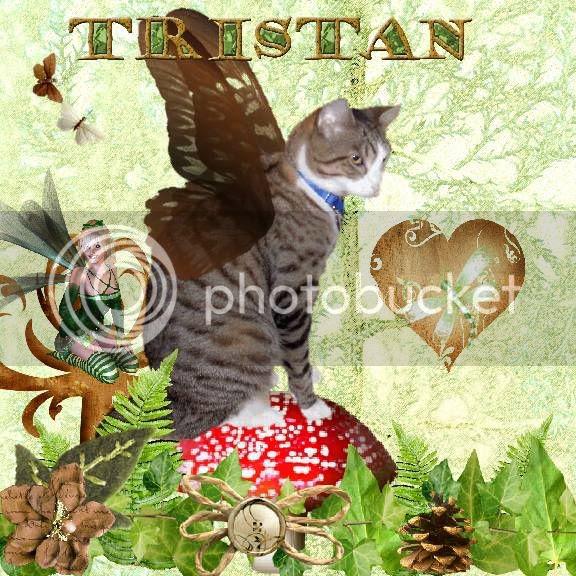 Fairies,Fantasy,Sir Tristan,Tabby Cat,Domestic Cat