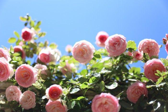 Eden Rose at Garden Valley Ranch