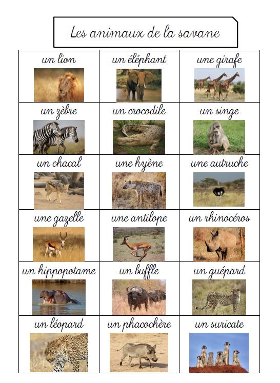 Zwierzęta - zwierzęta żyjące na sawannie - Francuski przy kawie