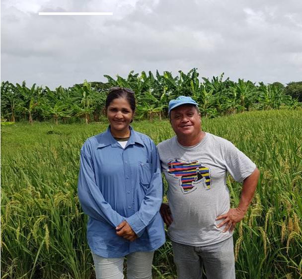 System Of Rice Intensification Venezuela