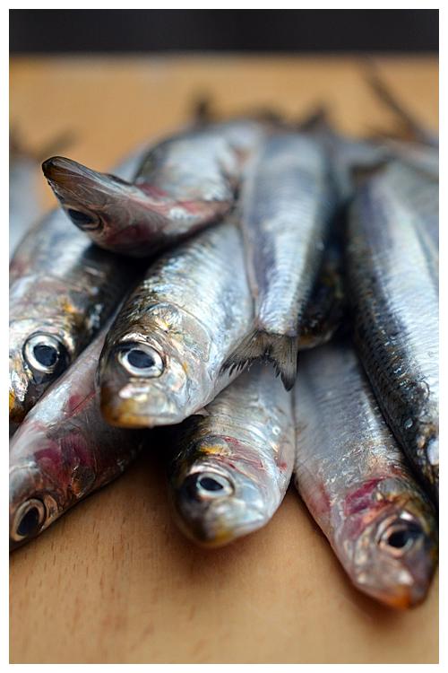 sardines© by Haalo