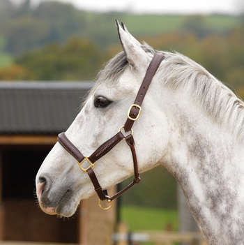 Blenheim Oakridge Halter picture