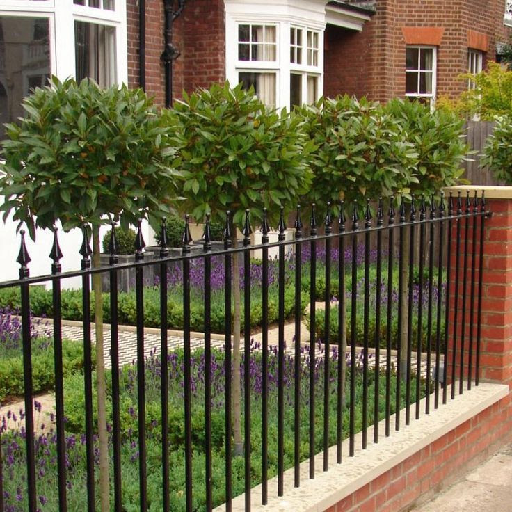 Lavender and Bay Trees in Modern Country Front Garden