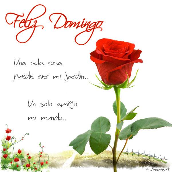 Imagen De Una Hermosa Rosa Para Un Feliz Domingo