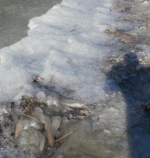 Πάγωσε η λίμνη Πετρών στο δήμο Αμυνταίου! (φωτο)