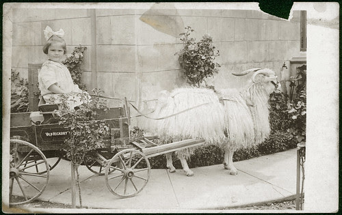 Girl in goat cart