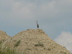 A stinker on a hill