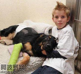 英忠犬替小主人被车撞 幸无大碍