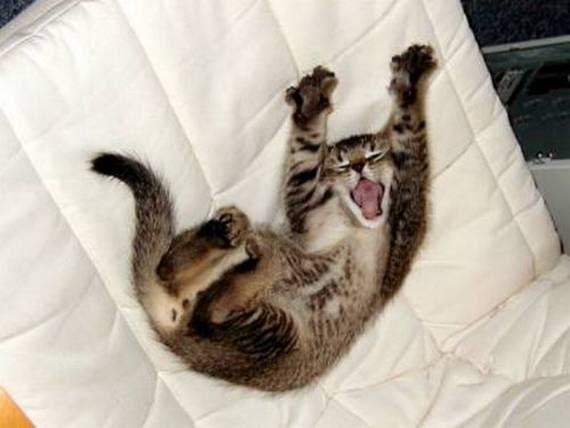 zevalice10 Gambar Anak Kucing Menguap dengan Sangat Comel