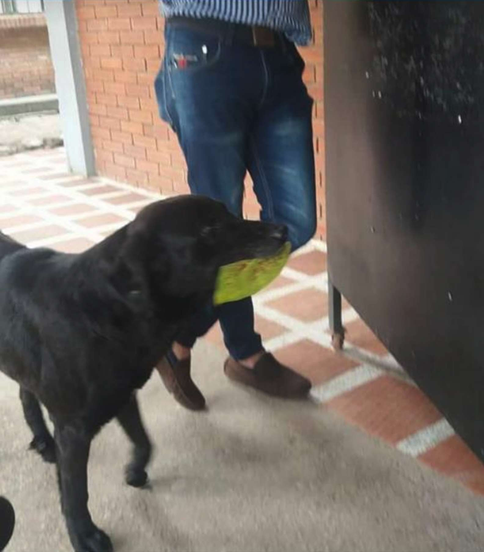 Clever Dog Always Brings a Leaf to 'Buy' Himself Treats At The Store