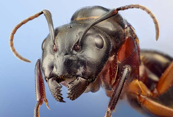 Εκπληκτικές macro φωτογραφίες εντόμων (15)