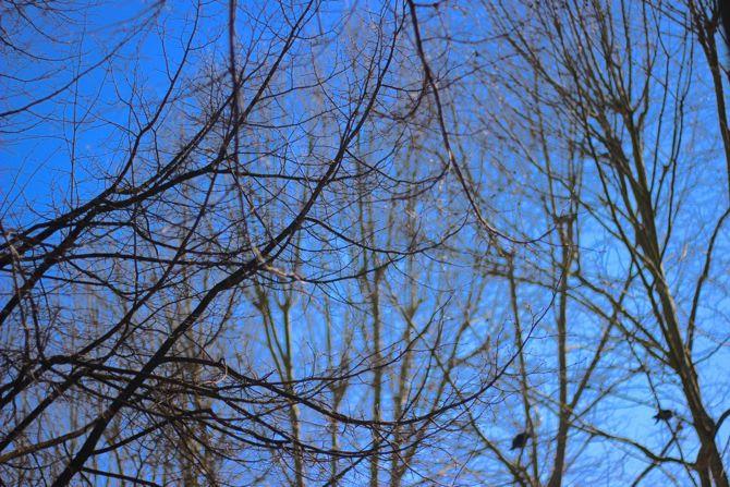 photo 2-bordeaux-printemps-place-quinconces_zps1affe1fd.jpg