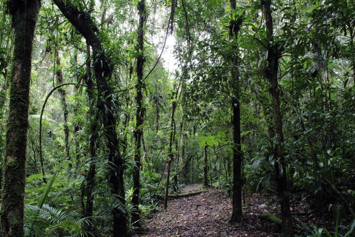 Uma das linhas temáticas do atual edital são as Unidades de Conservação de Proteção Integral e Reservas Particulares do Patrimônio Natural (RPPN). RPPN Chácara Edith, em Brusque, Santa Catarina. Foto: Sandro Salomon.