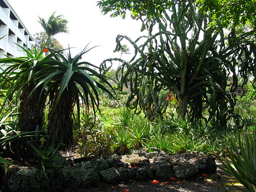 Moir Garden