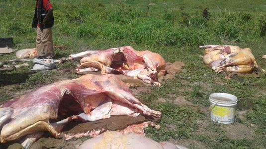 Cerca de 2,5 toneladas de carnes irregulares foram apreendidas | Foto: Divulgação SSP