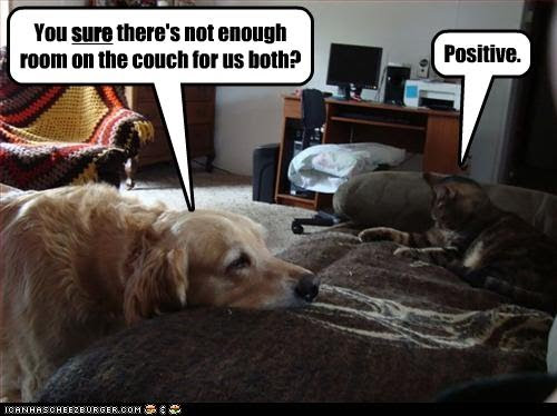 photo of a cat lying on a couch and telling a dog there is no room
