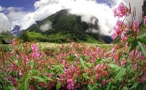 Lembah Bunga di Himalaya