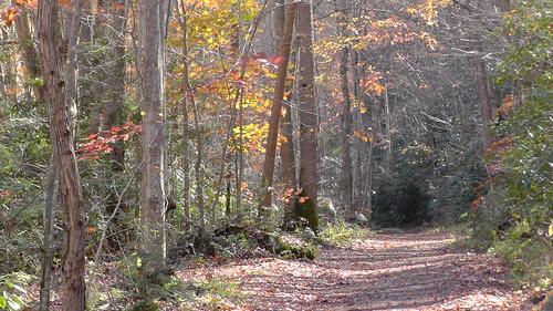 S1140004_Little_River_Trail