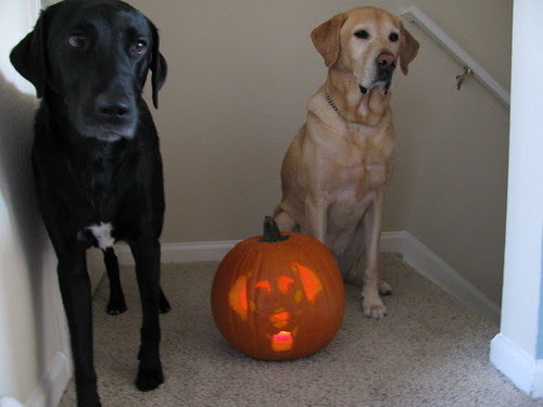 Scary pumpkins