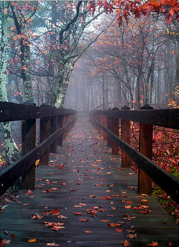 Bridge To Mist Woods por Mike Hainstock