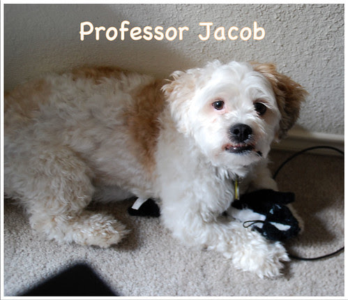 Prof-Jacob