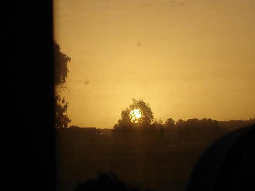 Sunrise framed by tree
